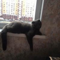Пропал кот, окрас дымчатый, вислоухий