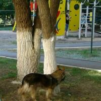 Найдена собака\пёс, окрас черно-коричневый