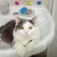 Потерялся кот, окрас черно-белый
