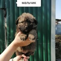 В добрые руки, собака и щенки