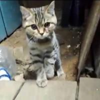 В добрые руки, котенок, окрас серый, полосатый