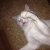 Пропал кот. окрас белый