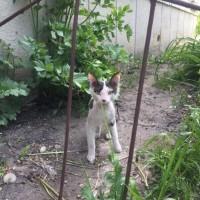 Найден котенок, окрас черно-белый