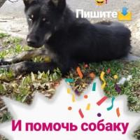Потеряна собака, окрас темный