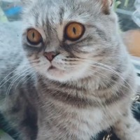"Потерялась кошка, окрас ""вискас"""
