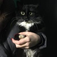Найдена кошка, окрас черно-белый