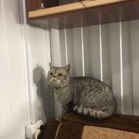 Потерялся кот, окрас серый, полосатый