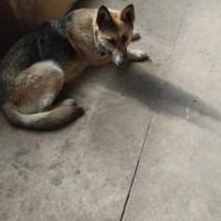 Найдена собака, окрас смешанный