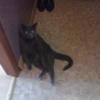 Потерялся кот, окрас дымчатый