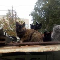 В добрые руки, коты и кошки