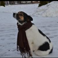 В добрые руки, собака, окрас белый с черными-коричневыми пятнами