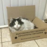 Пропала кошка, окрас чёрно-белый, крупная, пушистая
