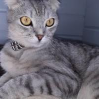 Потерялся кот, окрас серо-белый
