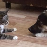 В добрые руки, кошка и пёс