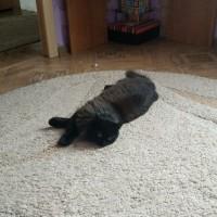 Пропал котенок, окрас черный