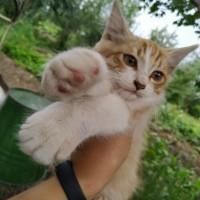 В добрые руки, котенок, окрас рыже-белый