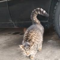 В добрые руки, котик, окрас камышовый
