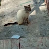Найдена кошка с ошейником красного цвета со стразами