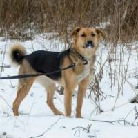 Пропала собака, окрас черно-коричневый