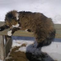 Пропал кот, окрас рыже-серый с белым