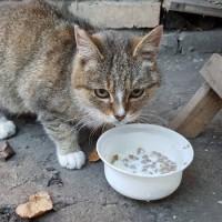 Найдена кошка, окрас камышовый с белыми лапками