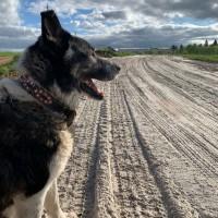 Убежал пёс, окрас черно-белый