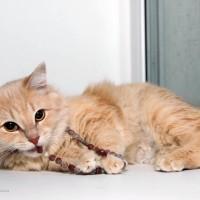 В добрые руки, кошка, окрас рыжий