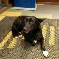 Найдена собака, окрас черный с белыми лапками