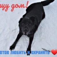 В добрые руки, пёс, окрас черный