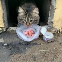 Найден котенок, окрас камышовый