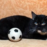 В добрые руки, котик, окрас черный с белым