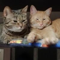 В добрые руки, кошки