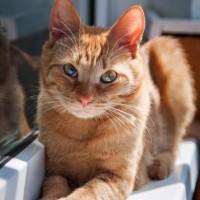 В добрые руки, кот, окрас рыжий