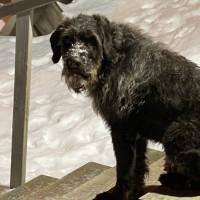 Найдена собака, породистая