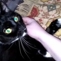 Пропал котик, окрас черно-белый