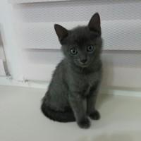 Найден котенок, окрас дымчатый