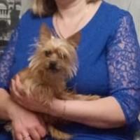 Потерялась собака, порода йоркширский терьер