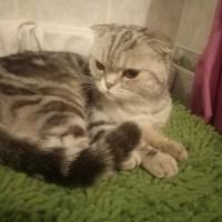 Найдена кошка, окрас серо-черный, полосатая