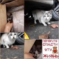 Найден котенок, окрас рыже-белый с серыми пятнашками