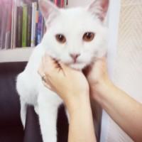 В добрые руки, кот, окрас белый