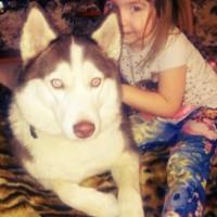 Пропала собака, порода хаски, окрас черно-белый