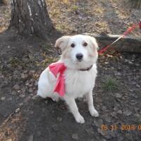 В добрые руки, собака, окрас белый с рыжими пятнами