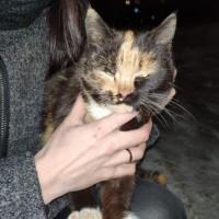 Найдена кошка, окрас черно-рыжий