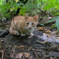 Пропал котенок, окрас рыже-белый