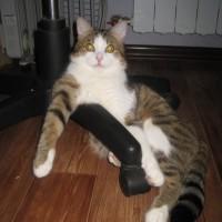 В добрые руки, кот, окрас коричнево-белый, полосатый