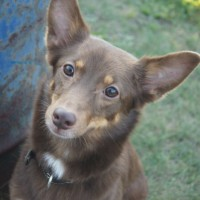Потерялась собака цвет светло коричневый