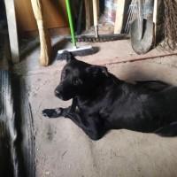Пропала собака, окрас черный