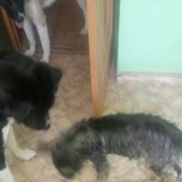 Найден щенок, окрас черно-коричневый