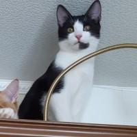 Пропал кот, окрас чёрно-белый
