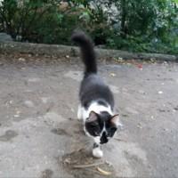 Пропал котенок, окрас черно-белый
